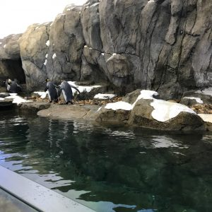 Penguins in indoor enclosure by Early Foundations
